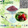 Wild rose caderas polvo/rose extracto de fruta en polvo