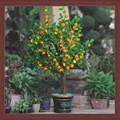 Laranja artificial de fruta da planta bonsai deco jardim diodo emissor de luz da árvore da flor artificial de fruta& bonsai para iluminação festival