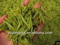 bio thé vert sencha