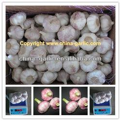 Garlic Price 2013/Fresh White Garlic With Different Size