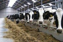Wanda Or Cattle Feed