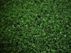 Soccer stadium blue artificial turf field hockey tennis courts CY-GPE-10 Sports Turf