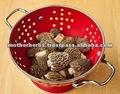 Morchella conica/morilles/champignons