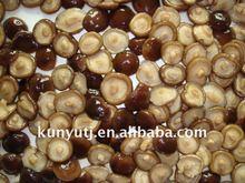 conserve di funghi shiitake
