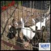 Anping HRT welded rabbit cage wire mesh (manufacturer)