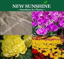 Dwarf Chrysanthemum, Daminozide, Plant growth regulator B9