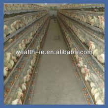 yüksek kalite Otomatik çince Tavuk kümesleri satılık endüstriyel metal