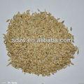 especificação verde sementes de cevada