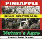 Organic Fresh Pineapple from SRI LANKA-0094772377797