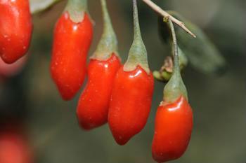 Ningxia Goji berry