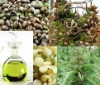 Cold Pressed Hemp Seed Oil Suppliers From India