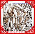 de alta calidad de semillas de girasol
