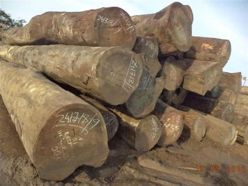 Tali african hardwood logs view timber
