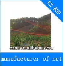 HDPE anti bird net which exported to Australia, USA, Korea
