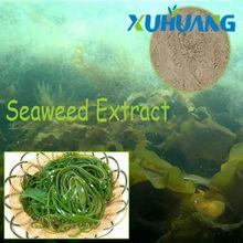 Seaweed Extract / Kelp Extract, Fucoidan 10%-90%