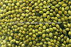 Coriander Seeds Exporter