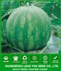 W09 Huapi big size good quality seedless watermelon seeds, seeds for planting