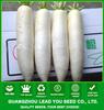 R13 Hanbaiyu high quality hybrid white radish seeds, hybrid vegetable seeds
