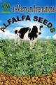 alfalfa samen