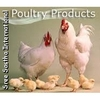 /product-tp/chicken-feed-150925356.html