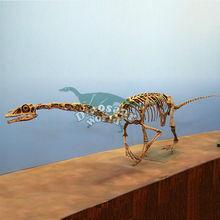 Life Size Falcarius Dinosaur Skeleton for Fake Skeleton Museum