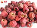 Caliente la venta de congelación- secos hawthorn berry en polvo orgánico en polvo