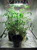 decorative plant grow lights led grow light bulb strip