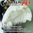 No.1 Supplier in China Factory Exporting Wholesale Large White Ostrich Feathers