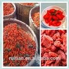 Import fresh organic goji berries,organic gojiberry