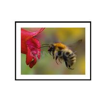 Aproximando abelha / Animal lona esticada / sala parede Pictures