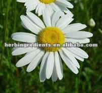 Real Material Chamomile Extract,98% Apigenin