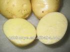 farm fresh potato