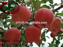 Delicious Qinguan Apple Fruits Containing Calcium