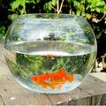 Rodada bonito acrylicl aquário de vidro, fish bowl, tanque do aquário
