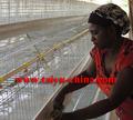taiyu criador de frango gaiolas para aves