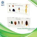 6 أنواع الحشرات النافعة 6 و أنواع الآفات qf التعليمية العينة المضمنة، العينة البيولوجية، الحشرات