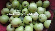 2013 Class one shaanxi summer green apple on sale (hot)