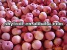 2013 Chinese delicious fresh fruit is coming!!! (HOT)
