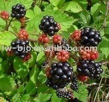 Raspberry extract powder 4%