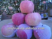 Supply high quality fresh fruit gala apple/red gala apple/ fresh gala apple