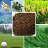 Tea Seed Meal/Cake/Powder for Aquaculture, Eco-pesticides, Organic Fertilizer, etc.