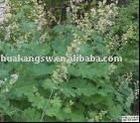 Pink Plumepoppy Fruit extract alkaloid 60%
