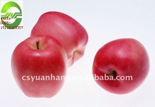 Hot supply !!!100% Pure Apple Extract