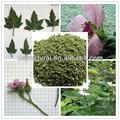 Calidad superior de las hojas de malvavisco/tabaco a base de hierbas primas material