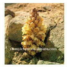 high quality Desertliving Cistanche Herb Extract