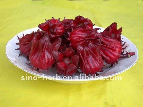 Séchées d'hibiscus fleur poudre extrait