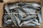 frozen canned pilchard(sardine) seafood