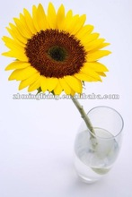 round high clear glass vases