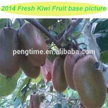 2014 new organic kiwi for sale /seasonal fresh kiwi fruit for sale