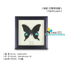 "FOUSEN(015 Random Species) Nature & Art 10"" single butterfly square PS framed butterfly"